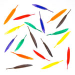 Feather Quills Assorted - 24pc