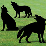 Plan-Wolf Pack Shadows (36