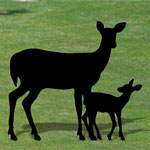 Plan-Doe & Fawn Shadows (lifesize)